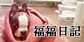 ◇福ちゃんのブログへ◇